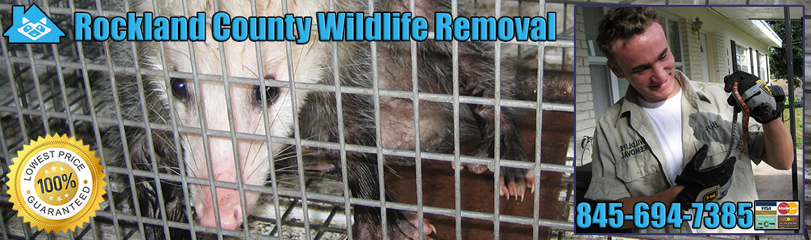 Rockland County Wildlife and Animal Removal